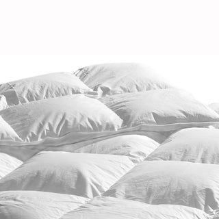 Highland Feather Albany Organic Cotton White Down Comforter