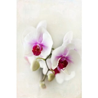 Marmont Hill - 'Orchids' by Sylvia Cook Painting Print on Wrapped Canvas