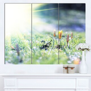 Designart 'Beautiful First Spring Flowers At Dawn' Floral Artwork on Canvas