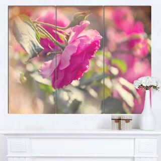 Designart 'Beautiful Pink Rose Flowers' Modern Flower Canvas Art Print