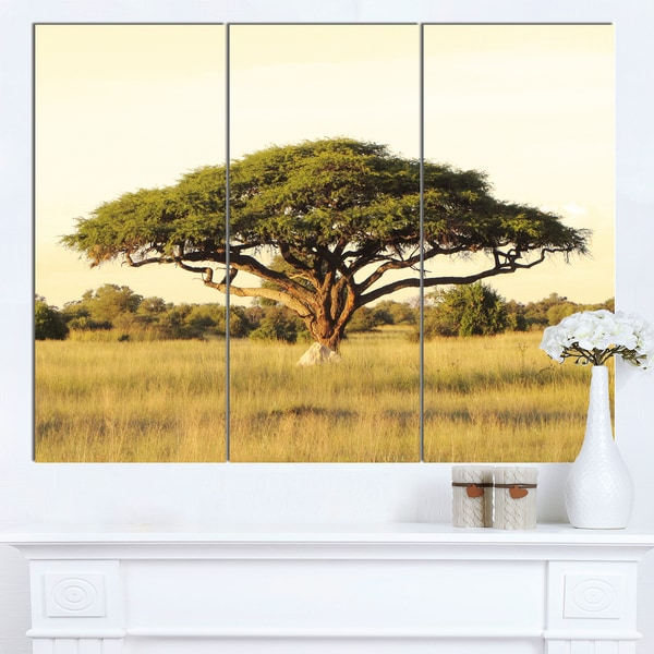 Designart 'Acacia Tree on African Plain' Oversized African Landscape Canvas Art