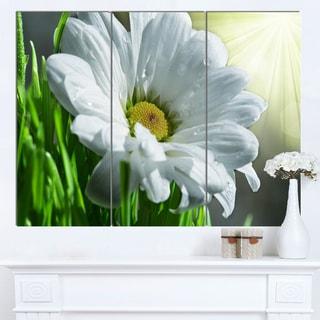 Designart 'Single Beautiful Daisy Flower' Large Flower Wall Artwork