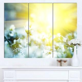 Designart 'Beautiful White Flowers At Sunrise' Large Flower Canvas Wall Art