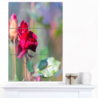 Designart 'Red Rose on Blurred Background' Large Flower Canvas Wall Art