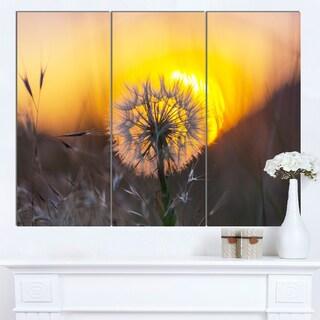 Designart 'Stunning Dandelion View At Sunset' Large Flower Canvas Artwork