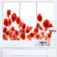 Designart 'Lovely Poppy Flowers on White' Modern Floral Artwork on Canvas - White