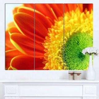 Designart 'Gerber Daisy Flower Petals' Extra Large Floral Canvas Art