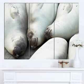 Designart 'Sea Elephants Taking Nap' Animal Wall Art Print