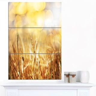 Designart 'Brown Wheat Plants in Field' Extra Large Floral Canvas Art