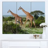 Designart 'Two Giraffes in African Savannah' African Canvas Artwork