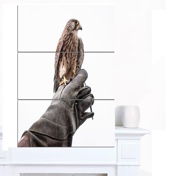 Designart 'Kestrel Sitting on Falconer Hand' Animal Wall Art Print
