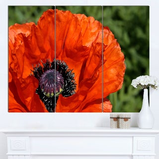 Designart 'Close-Up View of Red Poppy Flower' Large Flower Canvas Artwork