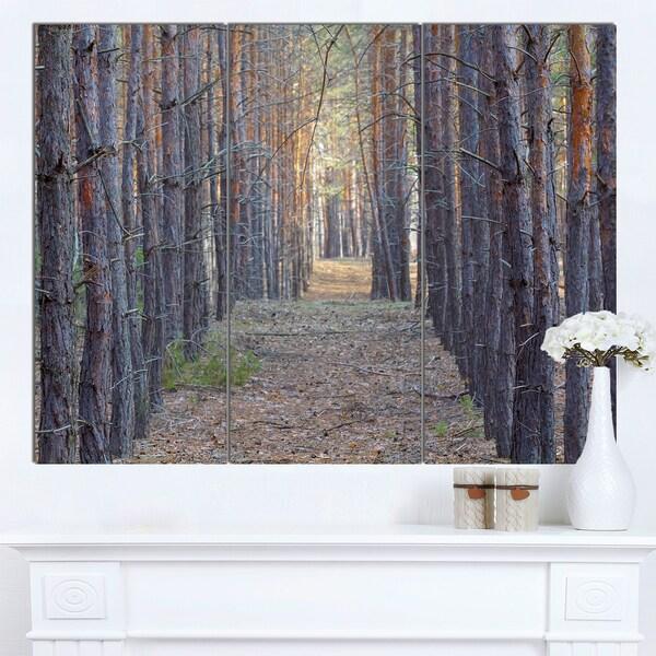 Designart 'Slender Pine Tree Forest Photography' Modern Forest Canvas Art