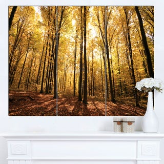 Designart 'Setting Sun over Dense Fall Forest' Modern Forest Canvas Art