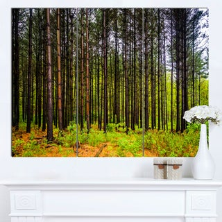 Designart 'Pine Trees in Michaux Forest' Modern Forest Canvas Art