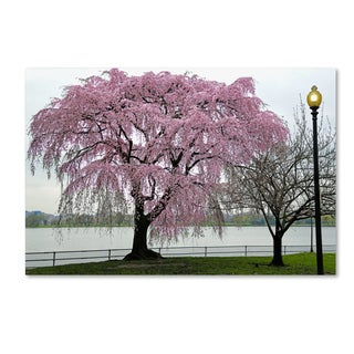 CATeyes 'Cherry Tree' Canvas Art