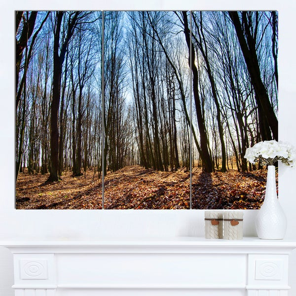 Designart 'Dark Trees in Forest at Sunrise' Large Forest Canvas Art