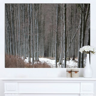 Designart 'Winter Forest with Thick Trees' Large Forest Canvas Art