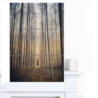 Designart 'Thick Forest of Poplars at Sunset' Large Forest Canvas Art