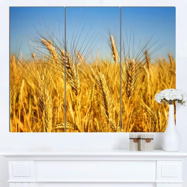 Designart \'Bright Golden Wheat Field\' Landscape Wall Art Print ...