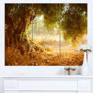 Designart 'Beautiful Old Olive Tree' Large Landscape Art Canvas Print