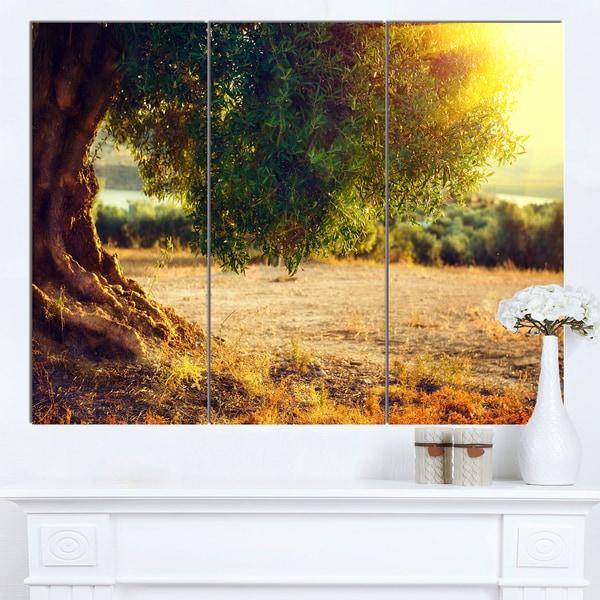 Designart 'Stunning Olive Trees at Sunset' Large Landscape Art Canvas Print - Green