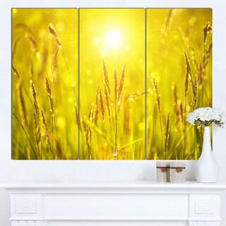 Designart 'Yellow Grass Flower at Sunset' Landscape Artwork Canvas Print