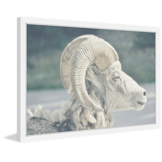 Marmont Hill - 'White Curled Horns' Framed Painting Print