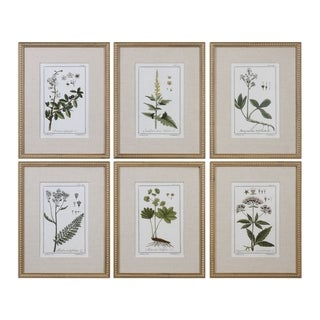 Uttermost Green Floral Botanical Study Prints (Set of 6)