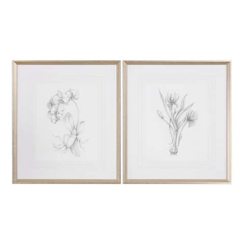 Uttermost Botanical Sketches Framed Prints (Set of 2)