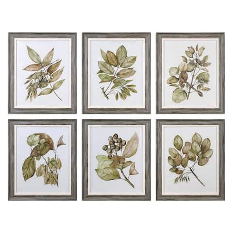 Uttermost Seedlings Framed Prints (Set of 6)