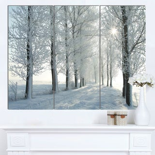 Designart 'Winter Trees Backlit by Morning Sun' Large Forest Artwork Canvas