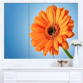 Designart 'Orange Daisy Gerbera Flower on Blue' Modern Floral Wall Artwork