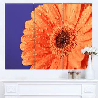 Designart 'Orange Daisy On Purple Background' Modern Floral Wall Artwork
