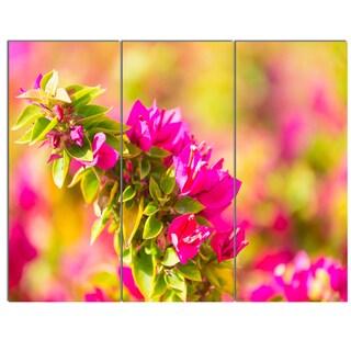Designart 'Beautiful Pink Bougainvillea Flowers' Floral Artwork on Canvas