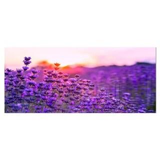 Designart 'Summer Sunset over Lavender Field' Large Floral Metal Wall Art