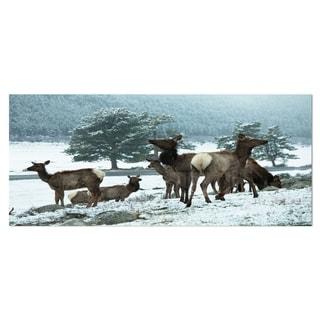 Designart 'Gang of Deer in Rocky Mountains' Extra Large Landscape Aluminium Art Print