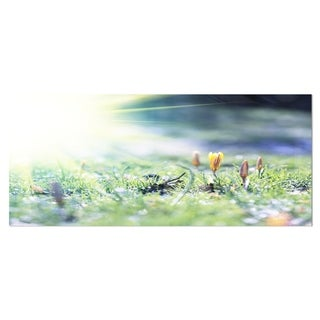 Designart 'Beautiful First Spring Flowers At Dawn' Floral Metal Wall Art