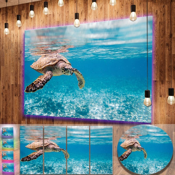 Shop Designart \'Large Hawksbill Sea Turtle\' Animal Photography Metal ...