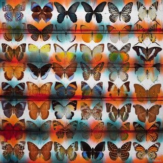 Handmade Parvez Taj - Butterflies Print on Reclaimed Wood