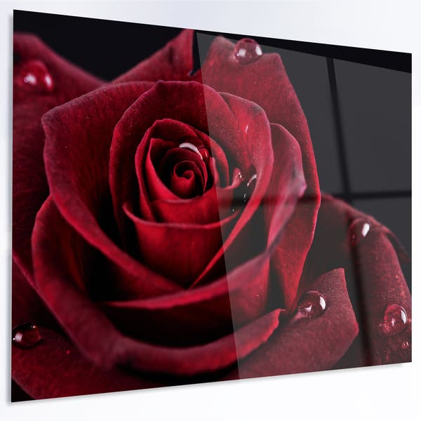 Shop Designart 'Red Rose with Raindrops on Black' Flowers