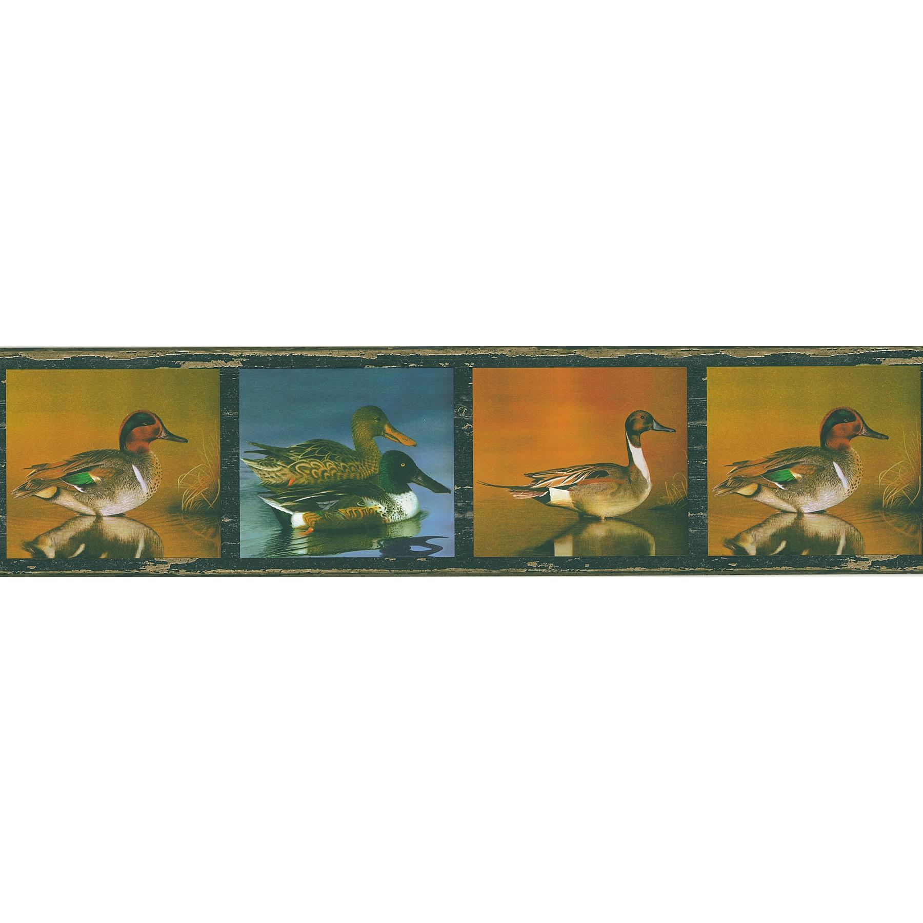 Brewster Black Duck Border (Black Duck Border)