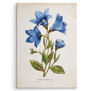 Wexford Home 'Botanical II' Multicolored Canvas Artwork