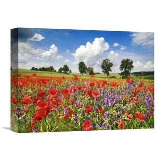 Global Gallery Frank Krahmer 'Poppies and vicias in meadow, Mecklenburg Lake District, Germany' Stretched Canvas Artwork