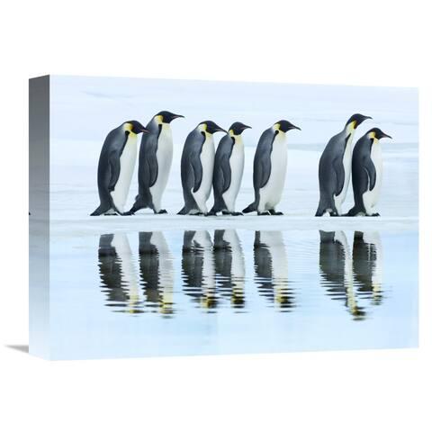 Frank Krahmer 'Emperor penguin group, Antarctica' Canvas Wall Art