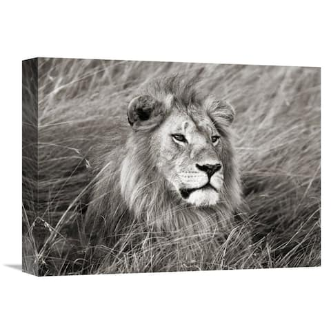 Global Gallery Frank Krahmer 'African lion, Masai Mara, Kenya' Stretched Canvas Artwork