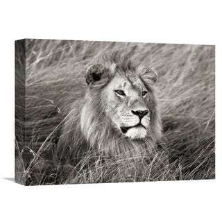 Global Gallery Frank Krahmer 'African lion, Masai Mara, Kenya' Stretched Canvas Artwork