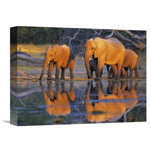Global Gallery Frank Krahmer 'African elephants, Okavango, Botswana' Stretched Canvas Artwork