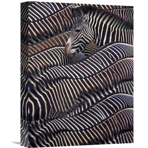Global Gallery DLI Agency 'Zebras in Samburu National reserve, Kenya' Stretched Canvas Artwork