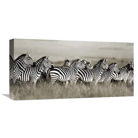 Global Gallery Frank Krahmer 'Grant's zebra, Masai Mara, Kenya' Stretched Canvas Artwork